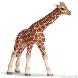 Schleich - World of Nature - Wild Life - Afrika - Giraffenbaby