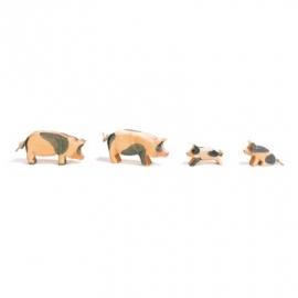 Schwein, Kopf hoch (gefleckt)