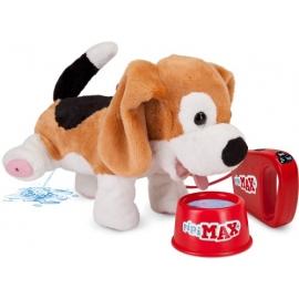 Pipi Max Beagle